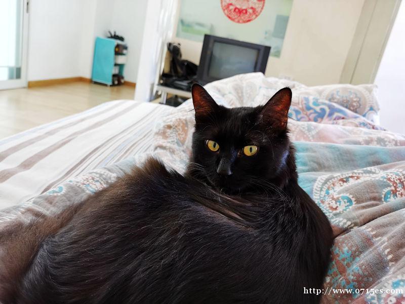 宠物猫免费送爱心人士收养